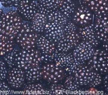 IQF blackberries B15